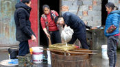 达州宣汉:村哥制作特色蕨根粉,你吃过蕨菜,但吃过蕨菜根制作的淀粉吗?