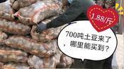 黑龙江哈尔滨疫情好转,700吨1.88/斤的土豆来了,看看哪里能买到