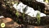 日本的河马这样吃西瓜,日本人:造了孽了,多浪费啊