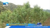 [湖北新闻]马旭明赴襄阳市调研扶贫工作