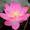 第十六集 祖国唤游子 香港彩云归 二十集大型电视诗画《万行长诗颂小平》-纪录片-高清完整正版视频在线观看-优酷