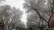 1月6日早上的科学院南路