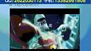二维动画设计 视频教程 全套到www.daboshi.com 上海交通大学