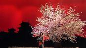 【中森明菜】宫廷樱花树下的妖姬版 Desire(歌之Top ten 1986.04.07)(TALK付中字)(AKN字幕组)