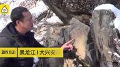 [晚报]大兴安岭发现距今约7000年岩画颜料含有动物鲜血
