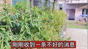 刚刚,湖北武汉传来一个悲伤的消息,希望疫情早点结束,来看看吧