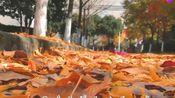 带你重温大学的美好时光,2019年江南大学毕业季校园MV
