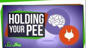 【SciShow】当你憋尿时身体会发生什么变化?What Happens When You Hold Your Pee