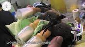 一家专门给蝙蝠开的诊所,你听说过吗?网友:爱护小动物!