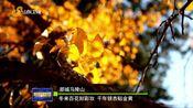 [山东新闻联播]金色齐鲁