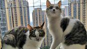 【九九与豆浆】两只猫腿上争宠的幸福生活(分p低质量猫片)