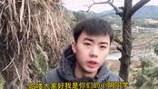 浙江省温州市畲乡古村落。小明同学带你看看少数民族小山村和千年古樟树。
