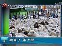 狼来了羊上www.yundvd.com]tvb最新电视剧