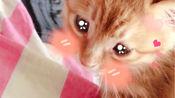【橘里橘气】猫语四级听力测试