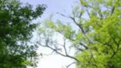 """【十堰】""""爱祖国、爱车城""""诗文朗诵大赛决赛(52)-电视剧-高清完整正版视频在线观看-优酷"""