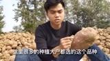 山东菏泽市曹县,农村红薯粉条加工过程