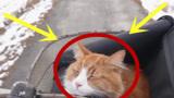 小伙用3D打印笔制作一只猫咪,看到成品后,画面太惊艳!