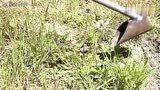 牛人用圆管制作的这个工具,真的太实用了,花园里面可以用到