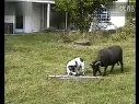 把羊逼急了也不好惹(www.idazhouw.com ).00M_mpeg4