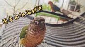 【鹦鹉】周末的休闲时光~