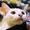 第7集雅安2-碧峰峡.mp4-自拍-高清完整正版视频在线观看-优酷