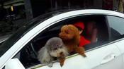 珠海女司机抱两条狗开奔驰被抓 辩解:哪条法律规定开车不能抱狗-国内新闻-青蜂侠Bee