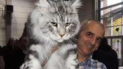 男子捡了只流浪猫,半年时间就一米多长!问了兽医才得知详情