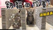 【黄阿玛的日常】奶猫田径赛!四小虎日常EP.2
