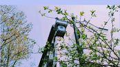 #Vlog.2 「清明踏春」苏州之旅 VUE Vlog |食物旅行分享|fo系博主