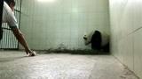 听到熊猫宝宝哀嚎的叫着妈妈,熊猫有产后抑郁症