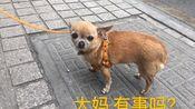 「幺鸡」Vol. 3 吃在苏州 | 狮子林-观前街-桃花坞-诚品书店-各种吃吃吃