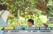 河南周口:猕猴桃喜获丰收游客忙采摘