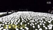 陪你一起看草原2015(江夏星河玫瑰)