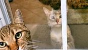 我们应该收养这只可爱的小猫吗?Should We Adopt This Cute Hungry Kitten- - Mean Kitty2019年1月13日