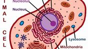 a-level biology 生物 cell structure
