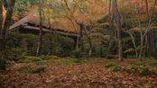 87. [4K] 祇王寺 ー四季のうつろひー 京都の庭園 Four seasons of Gio-ji Temple [4K] Japanese Concep