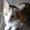 琪亚拉丁舞裙半身舞蹈裙新款荷叶边半裙成人专业练功服下装演出服-tmall.com天猫1-电视剧-高清完整正版视频在线观看-优酷