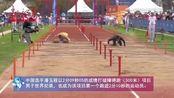 武汉世界军人运动会 军事五项是国际军体理事会最惊险、最艰苦、最具挑战性的竞技项目,其中500米障碍跑是..