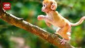 灵长类动物模型出现新冠肺炎症状 部分疫苗进入动物实验阶段