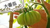 【小森林】12月第4周【拥有大小番茄和胡萝卜啦】