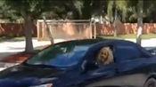 你驾照是怎么考出来的。车轮都压到马路牙子了,还使劲踩油门。