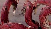 封神英雄:常昊放大招,幻化出8条大蛇,直接将雷震子和姬发困住