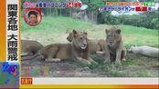 坂上动物王国【与支撑了9年的导盲犬最后的日紧贴▽激kawa动物大连发】10-25