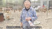 湖北襄阳:农村漂亮姑娘有闯劲儿,550一亩承包荒山搞养殖,了不起