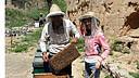 山西李老汉农家蜂蜜纯天然特级洋槐蜜真假蜂蜜鉴别枣花蜜野生蜜荆条蜜结晶蜜