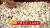 [湖南新闻联播]湘潭县花石镇:小莲子的产业梦