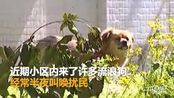 【安徽】小区内流浪狗众多 半夜扰民 居民生活不便