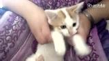 大耳朵猫 干锅加盟 www.jiulpx.com