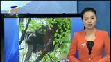 [宁夏新闻]四川雅安蒙顶山确认发现野生大熊猫