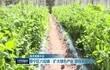 晋宁区六街镇:扩大绿色产业 增强发展后劲